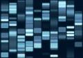 """Patrimonio genético: Análisis de ADN para un tratamiento """"a la medida"""""""