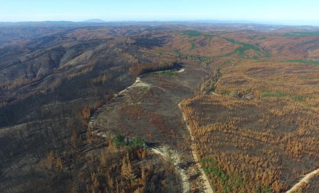 Los problemas que nos dejan los mega incendios forestales
