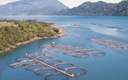 Chile y su oportunidad como productor de alimentos derivados de la acuicultura