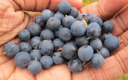 Alimentos Funcionales: dónde se encuentran y el por qué de sus beneficios para la salud