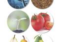 Nutri-Breeding: Desarrollo de variedades vegetales con mayor valor nutrauceútico para el mercado chileno
