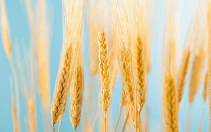 Comer sin gluten: ¿Es una dieta recomendable para los no celíacos?