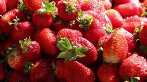 nyv-genomica-fruta